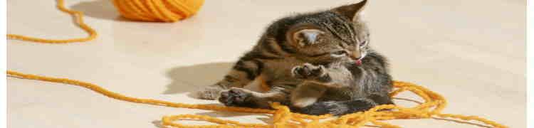 子猫の育て方!飼い方!飼育部屋